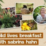 Images: native plants, a bird in a nest and a butterfly on a flower plus an image of author Sabrina Hahn
